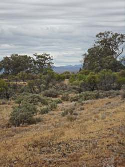 Flinders from the old Leigh Creek line